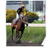 Thoroughbred Racehorse Poster