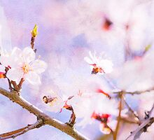 Pink Cherry Blossom by luckypixel