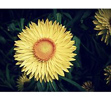 Sunny flower Photographic Print