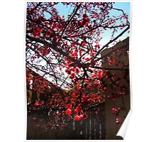 Red Berry Tree 3 Poster