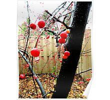 Berry Tree After The Rain Poster