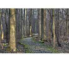 Winding Path  Photographic Print