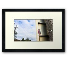Pinky the Penguin Framed Print