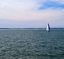 Sail Away by Tracey Frezza