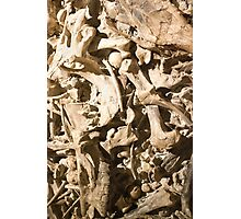 Bones with Skull on Top in Red Photographic Print