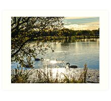 Autumnal Lagoons with Swans Art Print