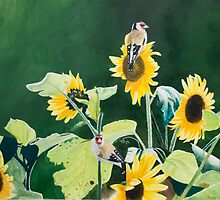 Goldfinches and Sunflowers by Roger Bolden