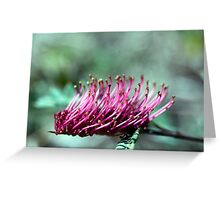 Brush Grevillea Greeting Card