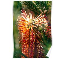 Glowing Bottle Brush Poster