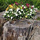 Odd Flower Pot by WildestArt