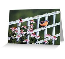 Chaffinch and Globe Flower Greeting Card