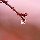 Spring Droplet by jayneeldred