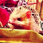 Hedgie Photo by MadFales247