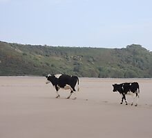 Cows Go On Holiday Too by CreativeEm