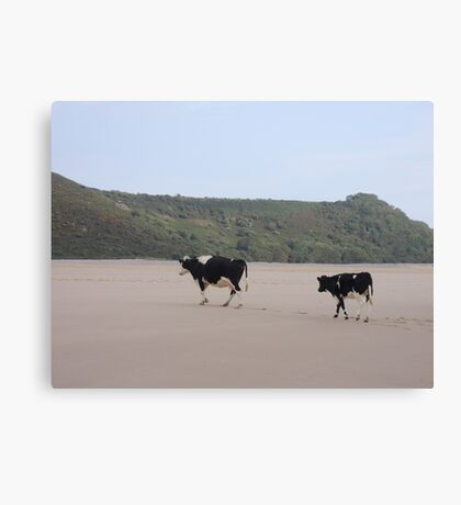 Cows Go On Holiday Too Canvas Print