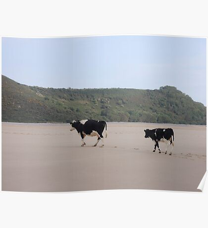 Cows Go On Holiday Too Poster
