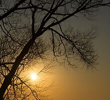 The Rising Sun and the Tree by Georgia Mizuleva