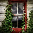 Ivy covered window by vigor