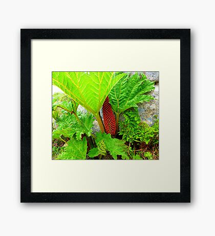 The Plant Life Of West Donegal Framed Print