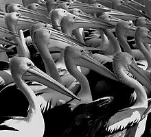 Spectaled Pelicans at the Entrance by Hope Ledebur