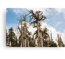 Skeletal Trees with Clouds Canvas Print