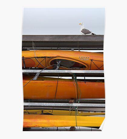 Seagull and Kayaks at AT&T Park San Francisco Poster