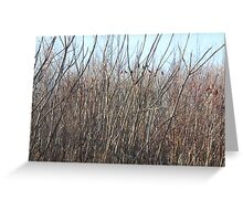 The beauty of twigs Greeting Card