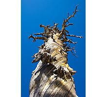 Skeletal Tree with Blue Sky Photographic Print