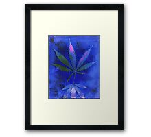 Hemp Lumen #2  Marijuana, Cannabis Framed Print