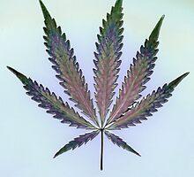 Hemp Lumen #7   Marijuana, Cannabis by FineArtHemp