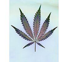 Hemp Lumen #7   Marijuana, Cannabis Photographic Print