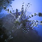 Lionfish - Madang Papua New Guinea by Stephen Permezel