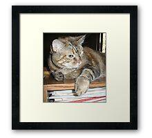 Cat on a Bookshelf Framed Print