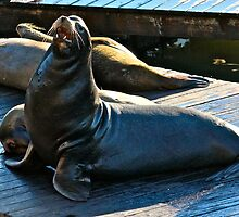 Sea Lion San Francisco by Ernie Dickey