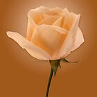 Golden Rose by Roger Otto
