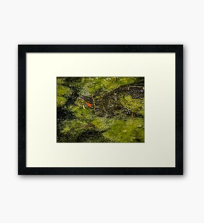 Mossy camouflage Framed Print