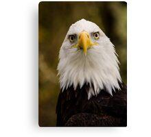 Portrait of a Bald Eagle Canvas Print