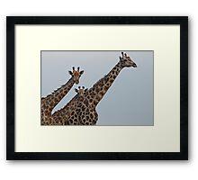 Giraffe Nursery Framed Print