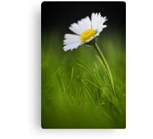 Rise and shine.. Canvas Print