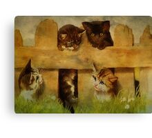Kittens at the Fence Canvas Print