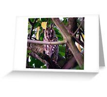 Long eared owl. Greeting Card