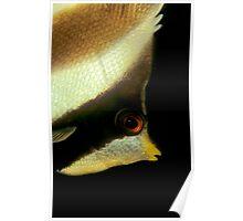 bannerfish Poster