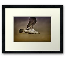Seagull Oil Framed Print