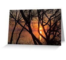 Sunrise Through the Willows - Lake Ontario, Toronto, Canada  Greeting Card