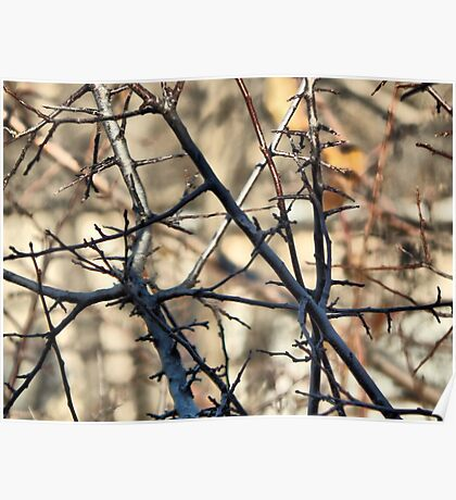 """""""Barely"""" Dressed Branches Poster"""