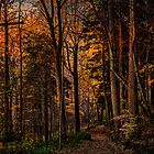 A Woodland Trail In Autumn by Chris Lord