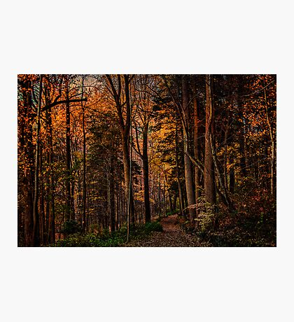 A Woodland Trail In Autumn Photographic Print
