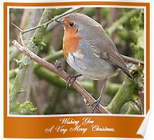 Robin in Hedge at Garstang, Lancashire, Poster