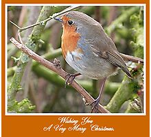 Robin in Hedge at Garstang, Lancashire, Photographic Print