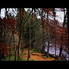 Late Autumn en route to High Force Waterfall by Debra Kurs